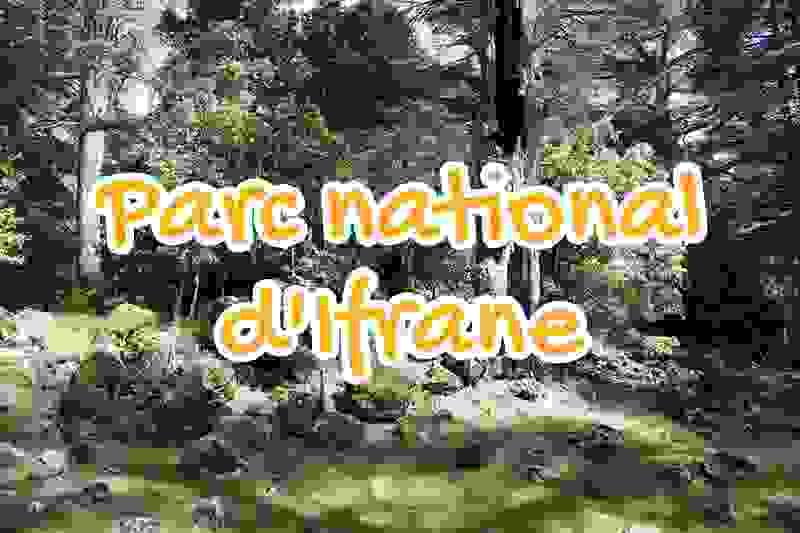 ifrane, national, park, morocco