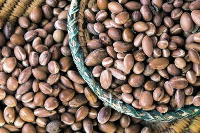 la flore riche variete medicinales et rares maroc