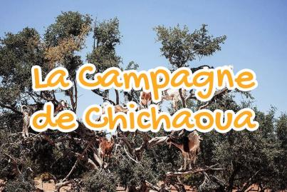 campagne, de, chichaoua, maroc