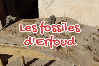 Le grand musée de fossiles au Monde